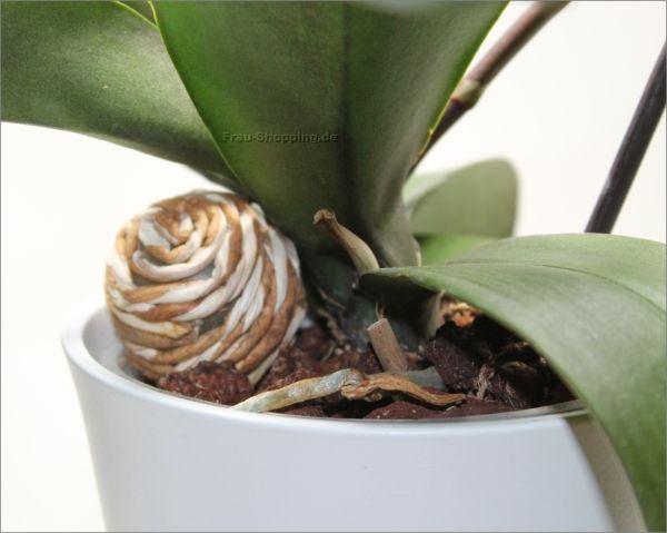 eine st tze f r kippelige orchideen balkon pinterest orchids orchid care und plants. Black Bedroom Furniture Sets. Home Design Ideas