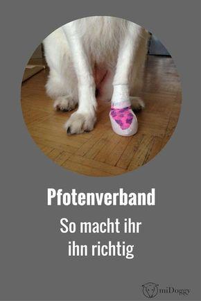 Gesundheit How To Make A Nice Hunde Gesunde Hunde Hundeschuhe