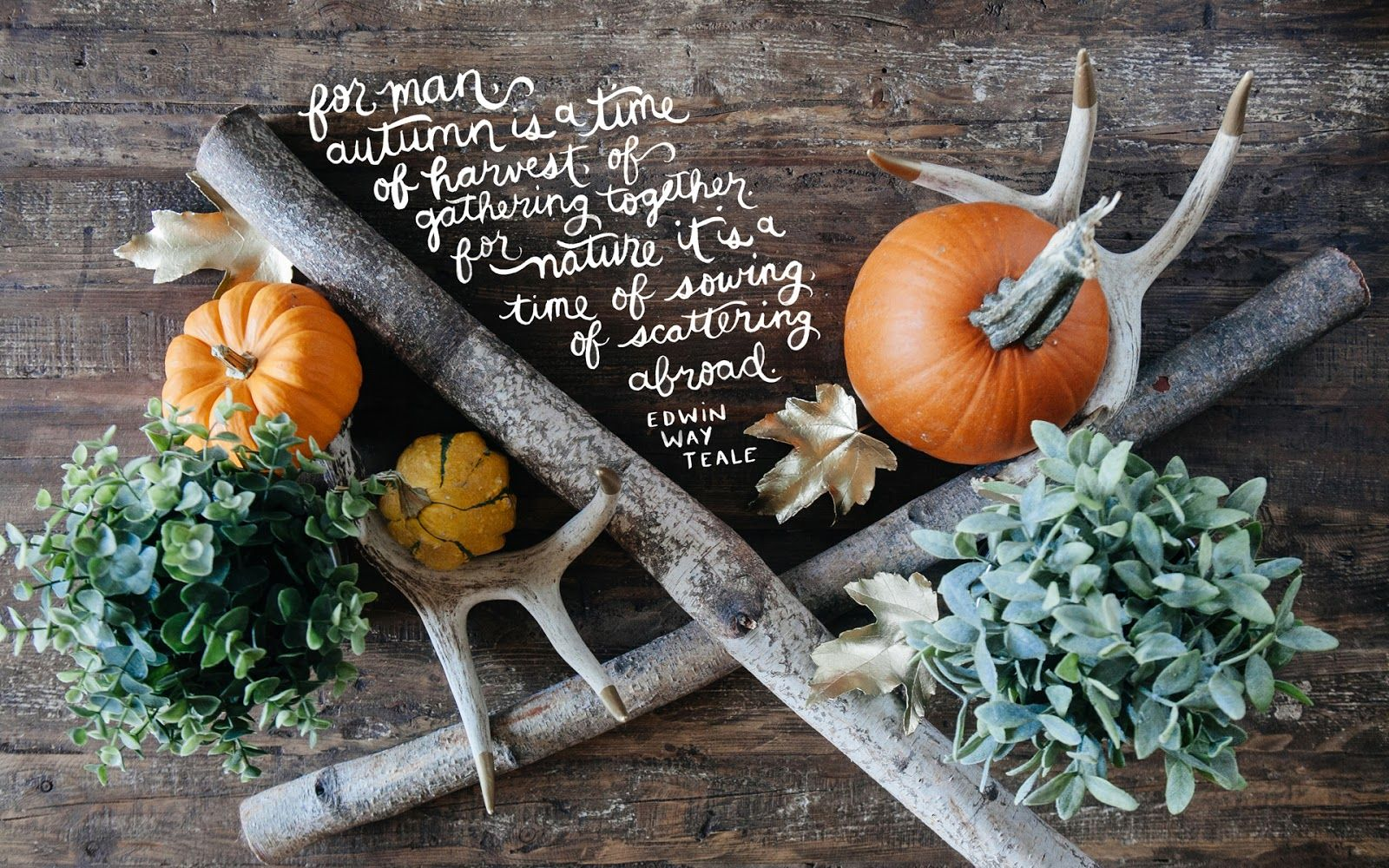 thorn + sparrow October 2013 Quotes Pinterest