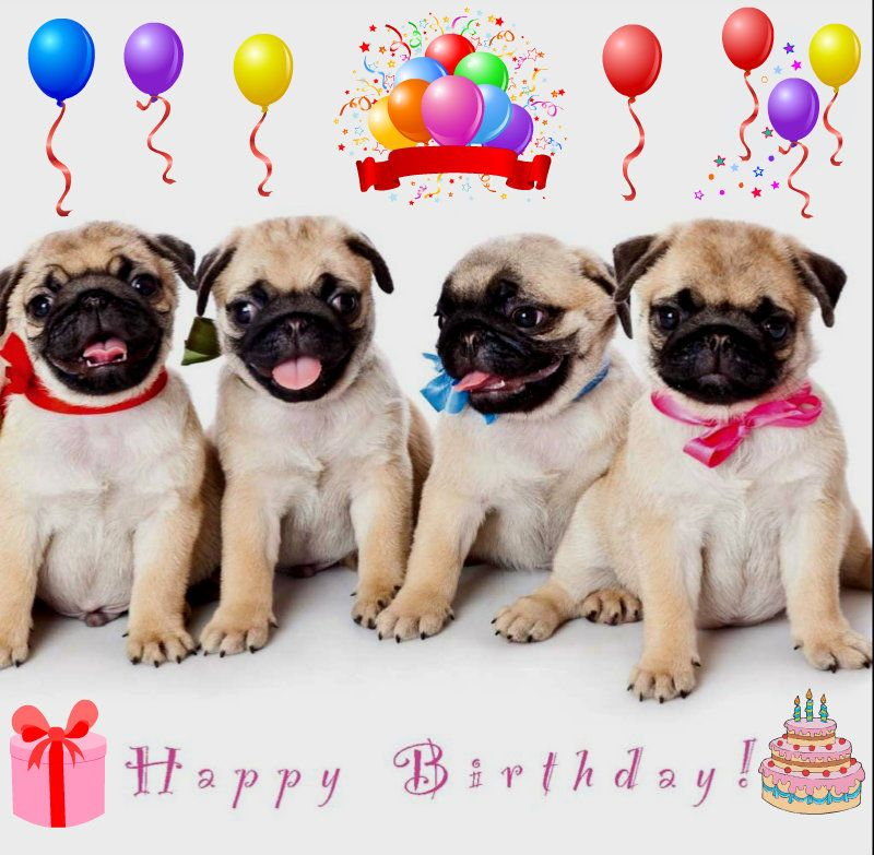 Funny Pugs Fan Art Birthday Pug Birthday Pug Happy Birthday Dog Puppy Shower