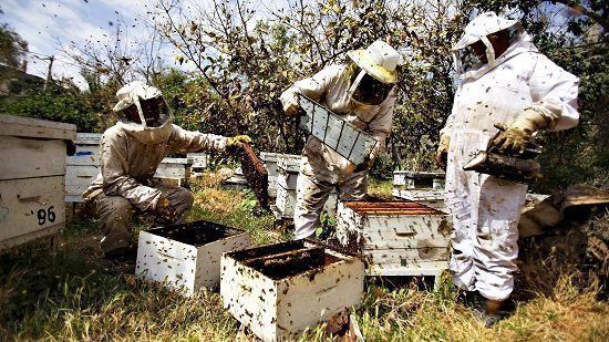Getting government funding for beekeeping is something any ...