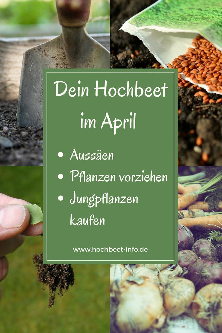 Dein Hochbeet Im April Pflanzkalender Was Wann Aussaen Anpflanzen Vorziehen Gemuse Krauter Heilpflanzen A In 2020 Garten Hochbeet Pflanzkalender Hochbeet Pflanzen