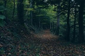 Um belo caminho!
