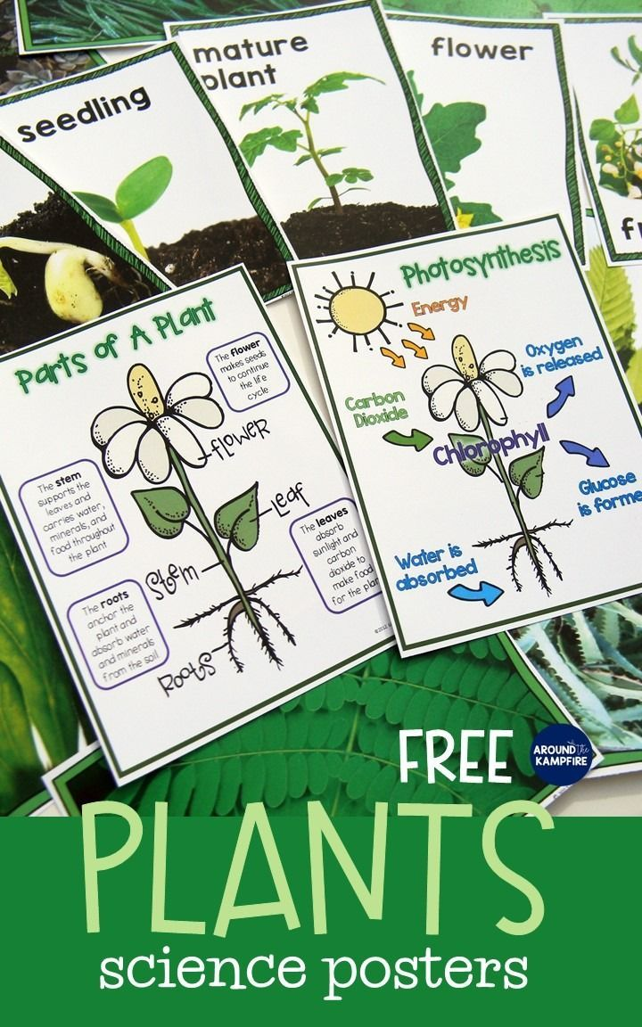 Free Plant Life Cycle Science Posters/Anchor Charts