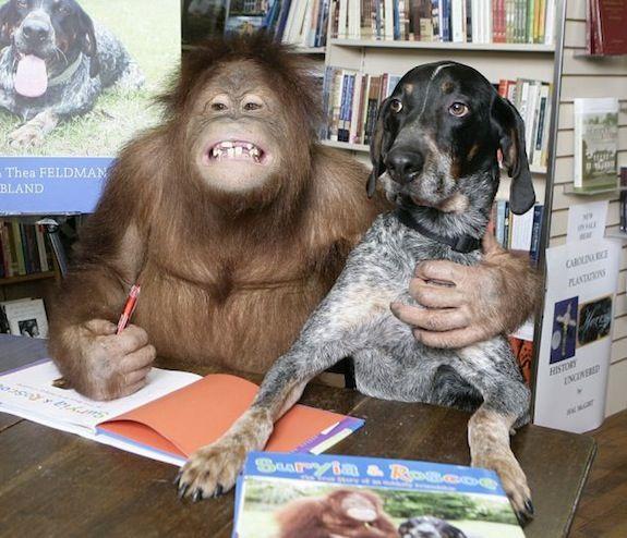Suryia the orangutan and Roscoe the Bluetick hound. Photos and video.