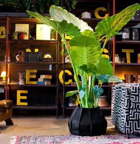 Dschungel-Feeling fürs Zuhause Indoor trees, Plants and Big plants