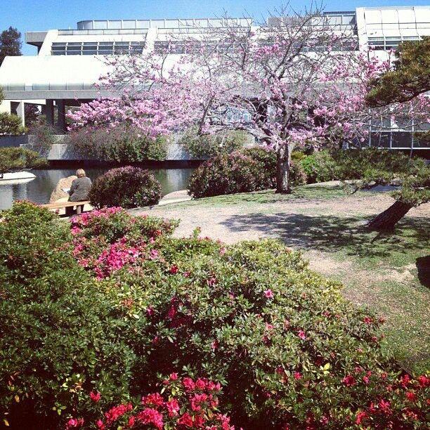 Cherry Blossoms In The Japanese Garden In Van Nuys California Japanese Garden Van Nuys California Garden