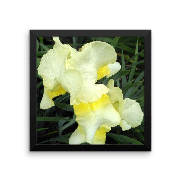 Yellow Iris Framed Poster