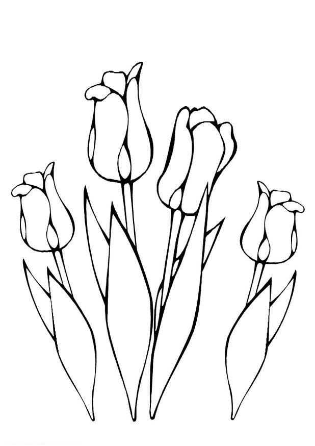 kleurplaat lente tulpen tulpen kleurplaten bloemen tekenen