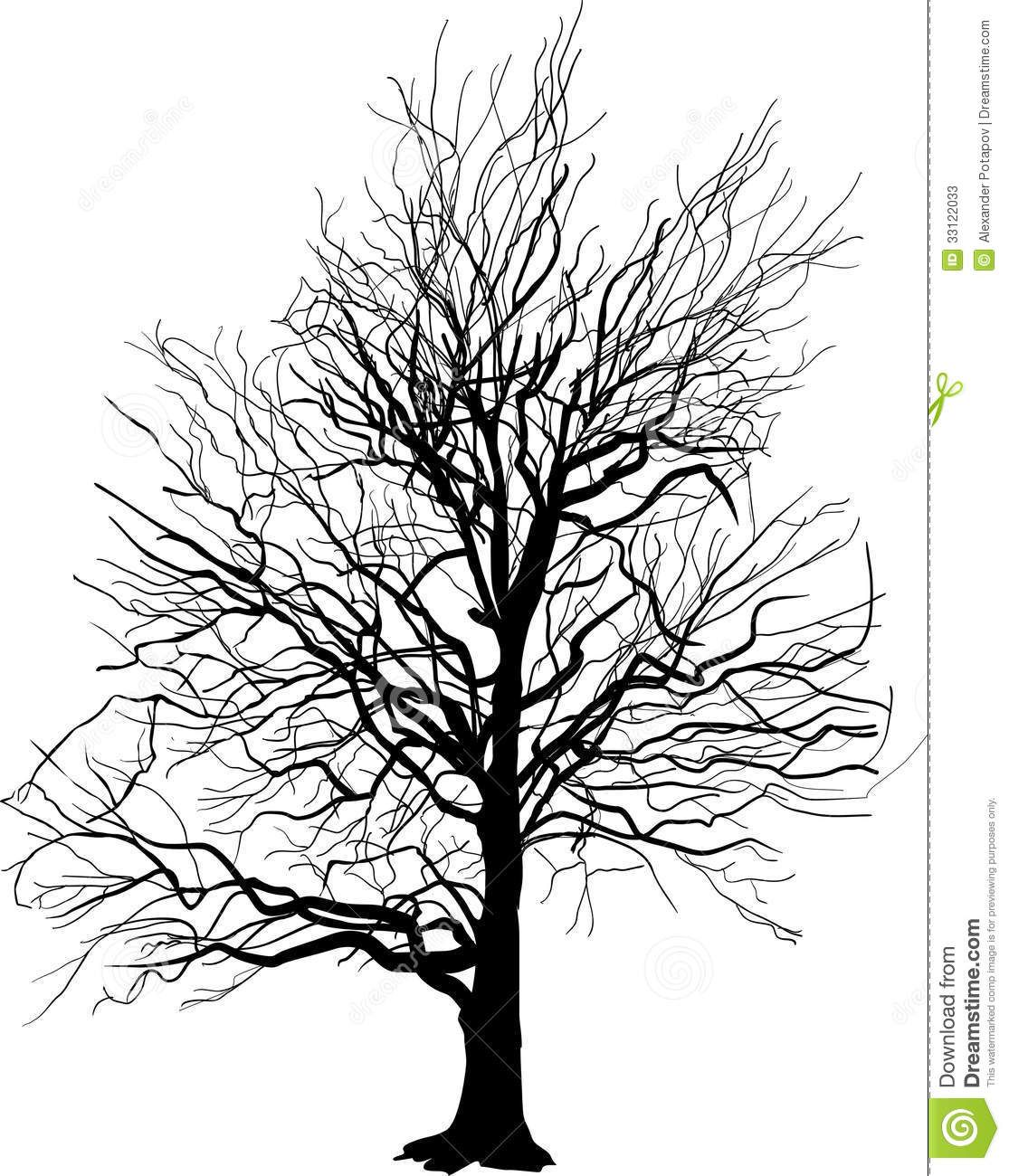 Bare Tree Silhouette Isolated White Illustration