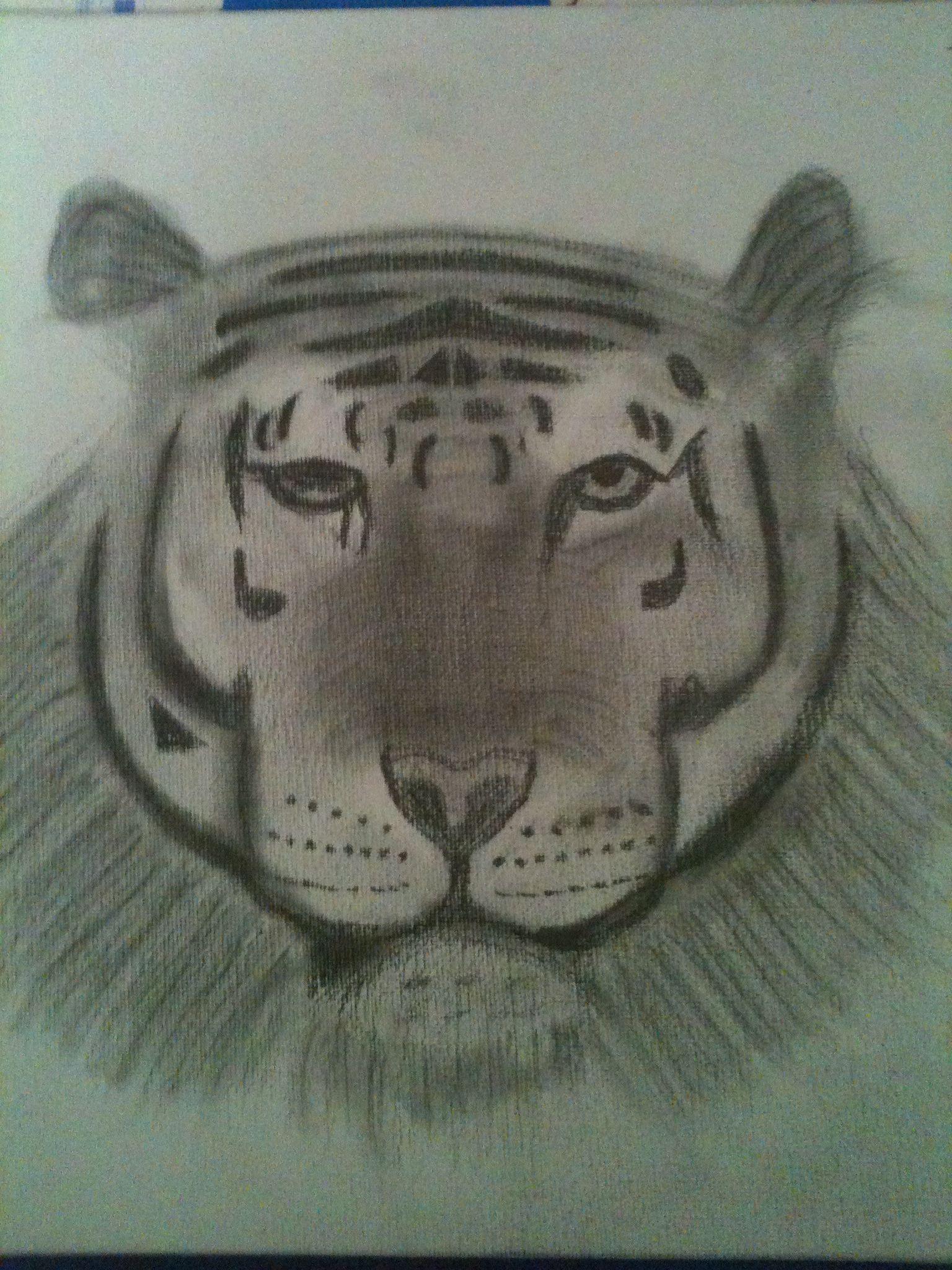 Tiger face ~ D.T Mann