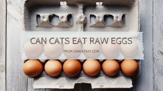 Can Cats Eat Raw Egg? How much Raw Egg are Safe for Cats