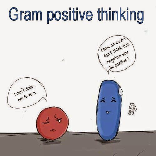 Gram Positive Thinking Biomedical Science Medical