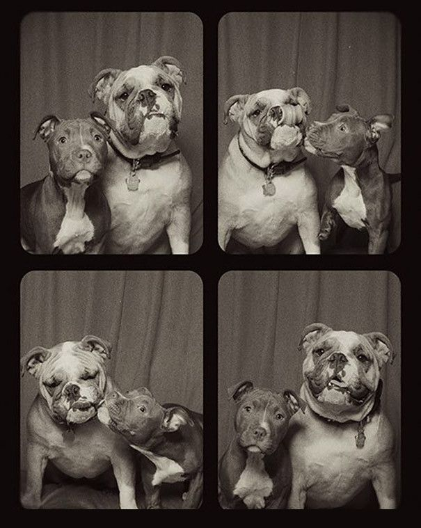 Here's What Happens When You Let Dogs Loose in a Photo Booth. The Result Is Adorable