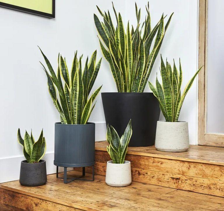 19++ Plantas para interiores nombres inspirations