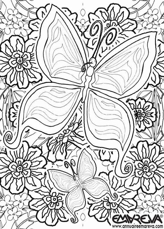 papillon-5-emareva.jpg (567×794)