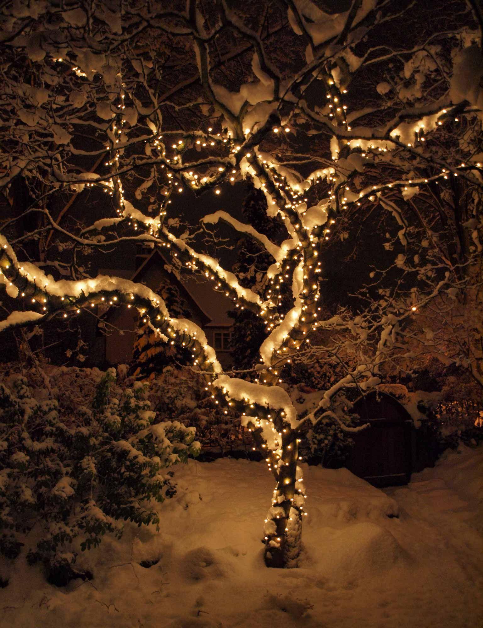 Christmas Tree Light Ideas Christmas Lights Outdoor Trees Outdoor Christmas Tree Christmas Lights Outside