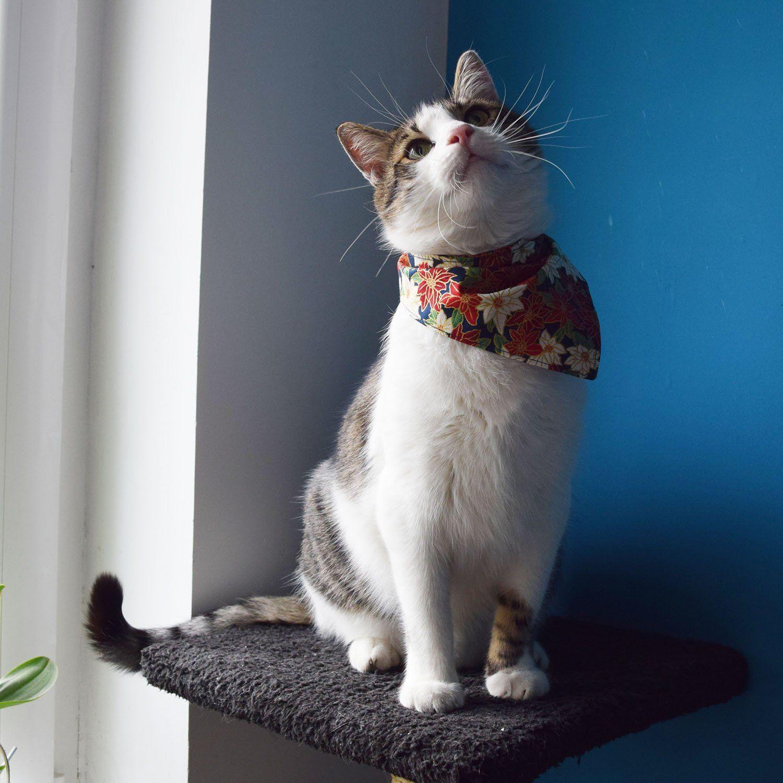 Christmas cat bandana, Holiday dog bandana, Flower pet