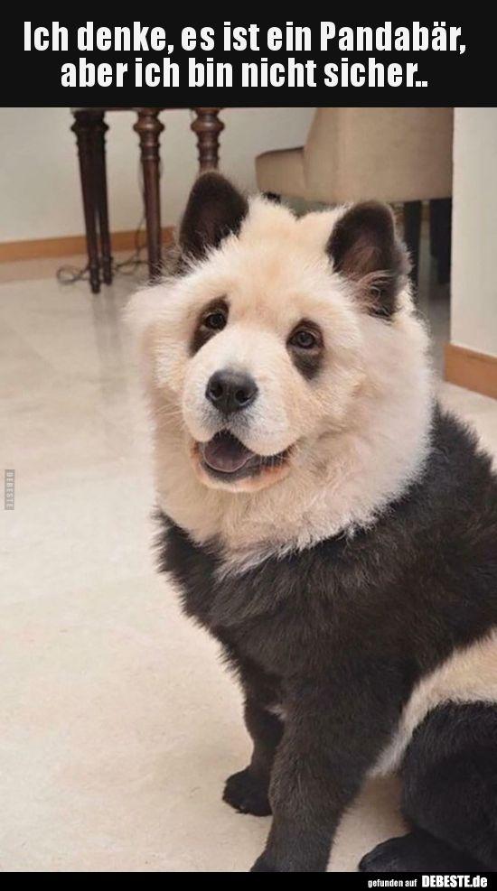 Ich denke, es ist ein Pandabär, aber ich bin nicht.. | Lustige Bilder, Sprüche, Witze, echt lustig #funnykittens
