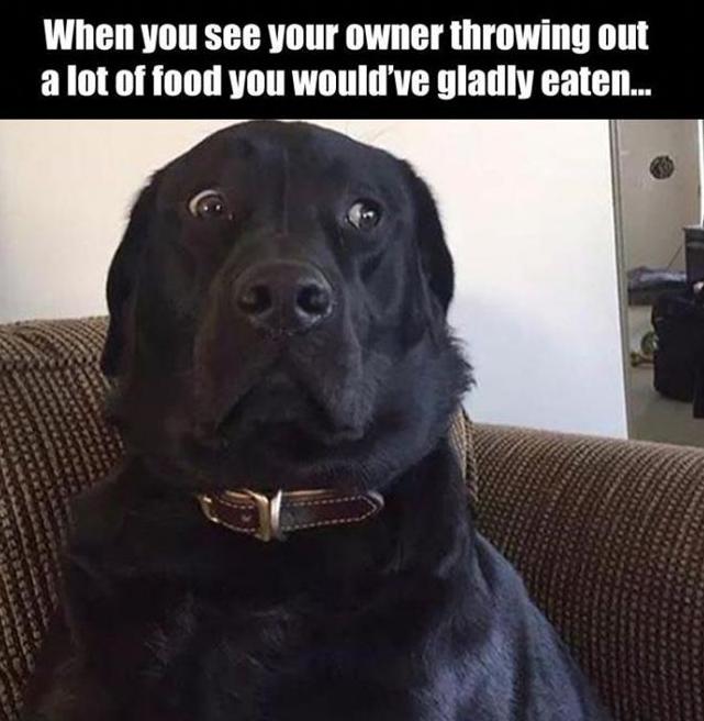 Clean Funny Dog Memes 2019 Dog Meme Face Cute Dog Memes Dog Memes Best Dog Memes Funny Dog Memes Funny Animal Funny Dogs Funny Animal Pictures Dog Quotes Funny