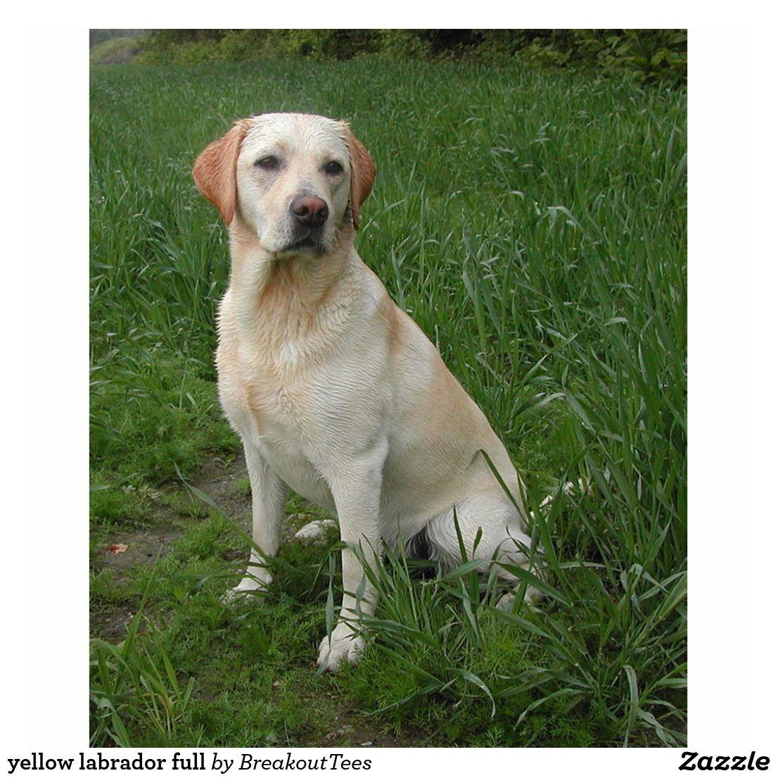 Yellow Labrador Full Cutout Zazzle Com In 2020 Yellow Labrador Labrador Labrador Retriever