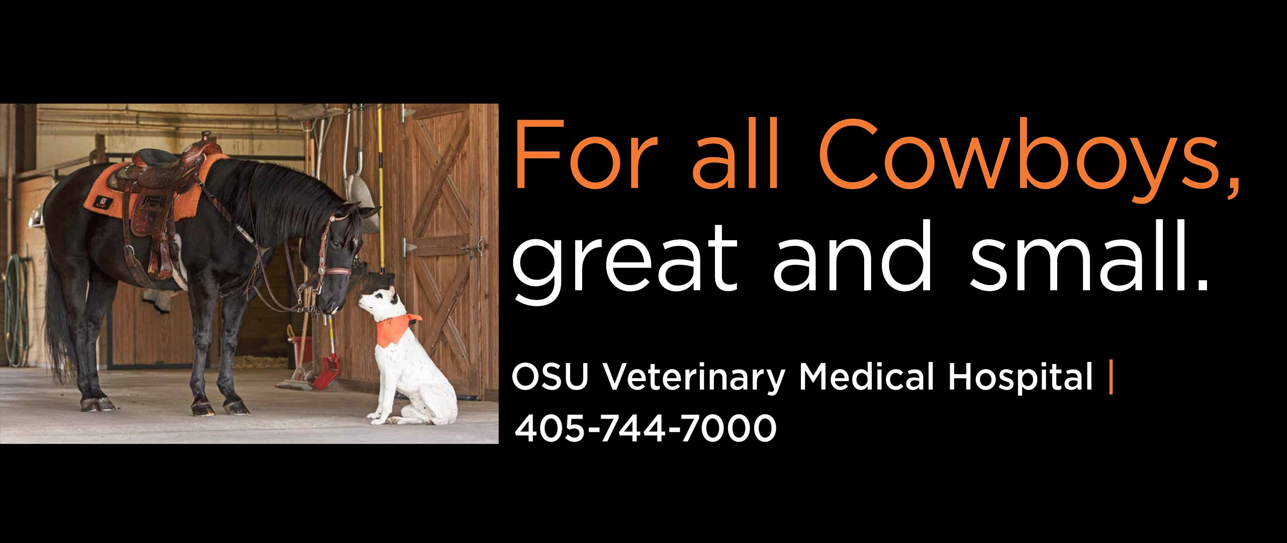 Boren Veterinary Medical Hospital Center For Veterinary Health