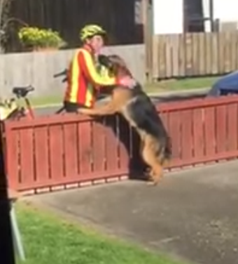 "Postman approaches neighborhood's ""aggressive"" dog"