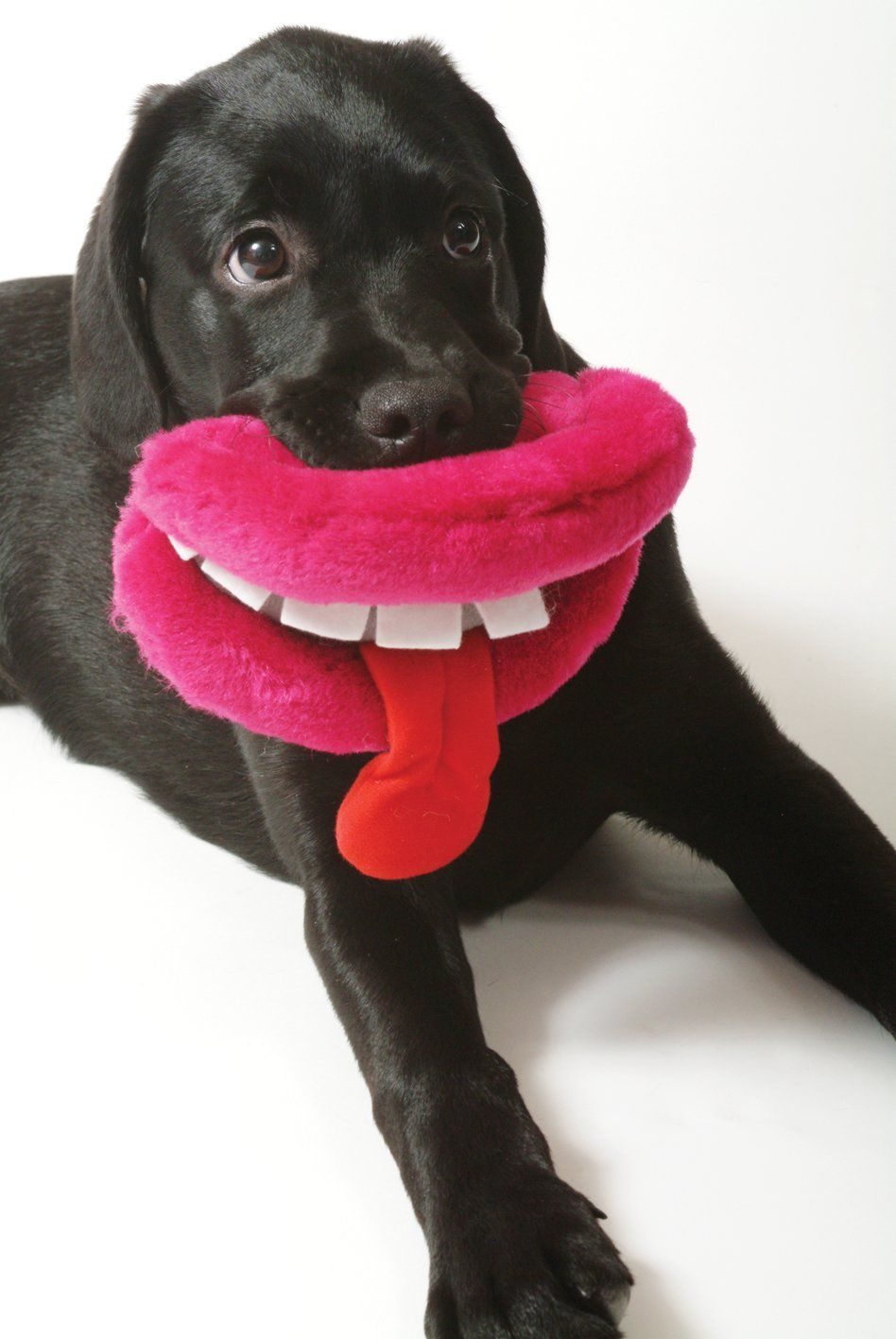 Amazon Com Ancol Dog Lips Toy Plush Squeaker Lips And Teeth