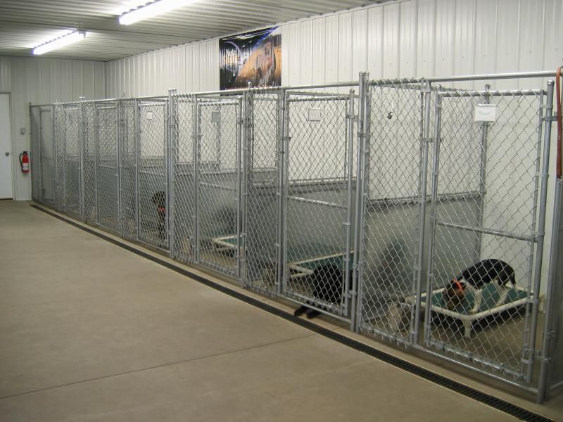 Multiple Dog Kennel Indoor Outdoor Building