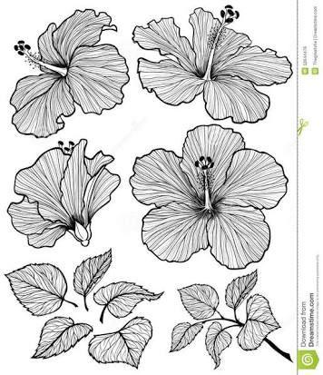 Resultado de imagem para flor de hibisco desenhos | Meus desenhos ...