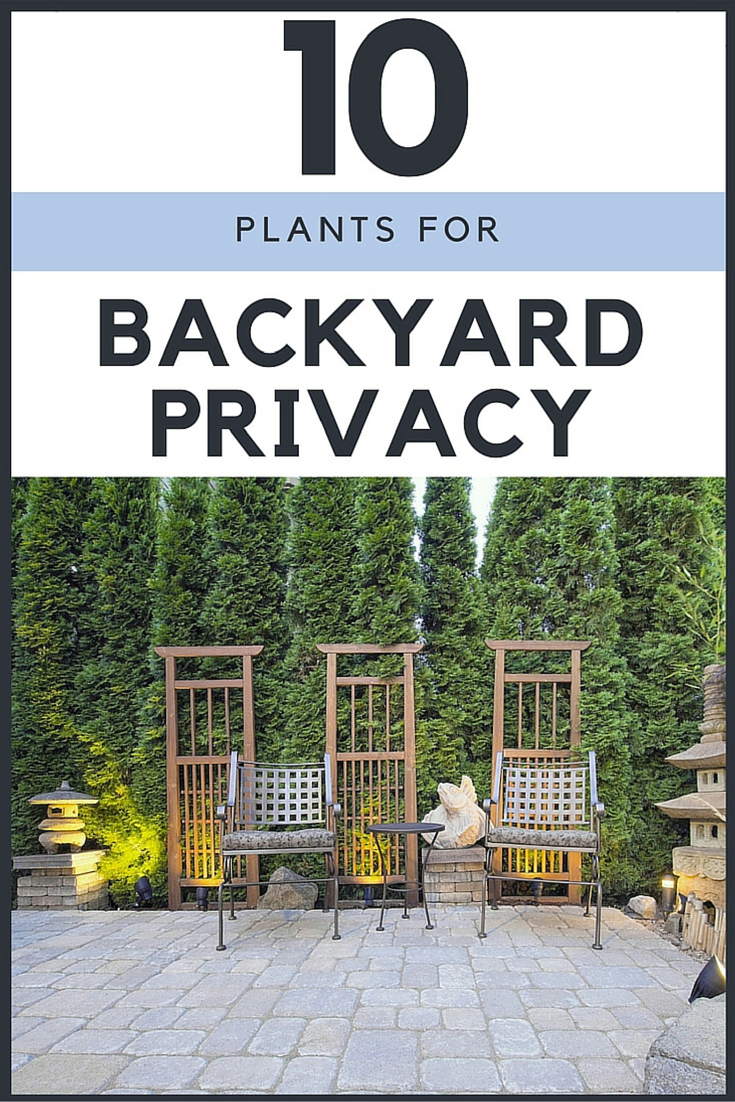 the best 10 plants to grow for backyard privacy shrub yards and