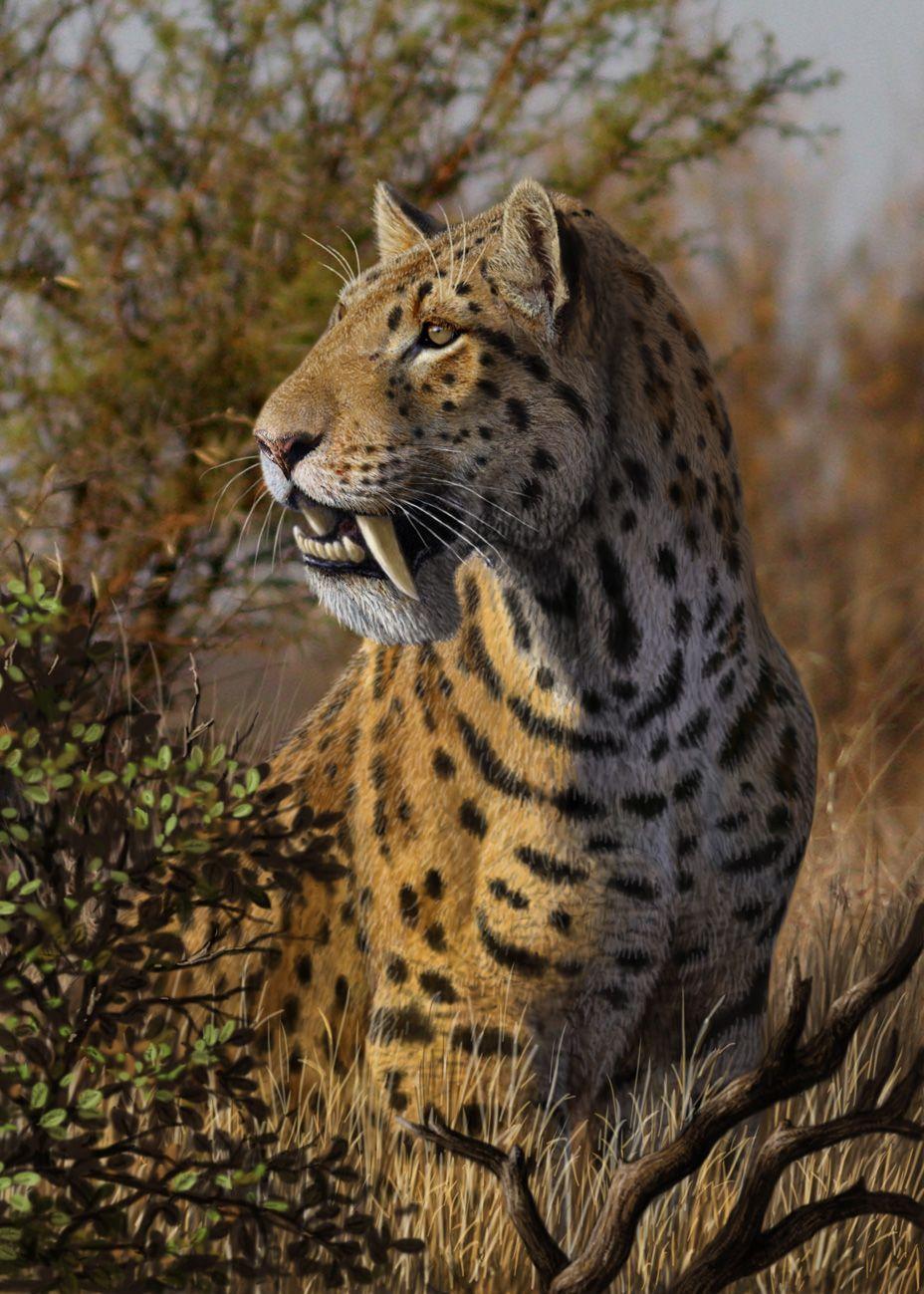 هل تعلم Toronto zoo, Big cats, Endangered species