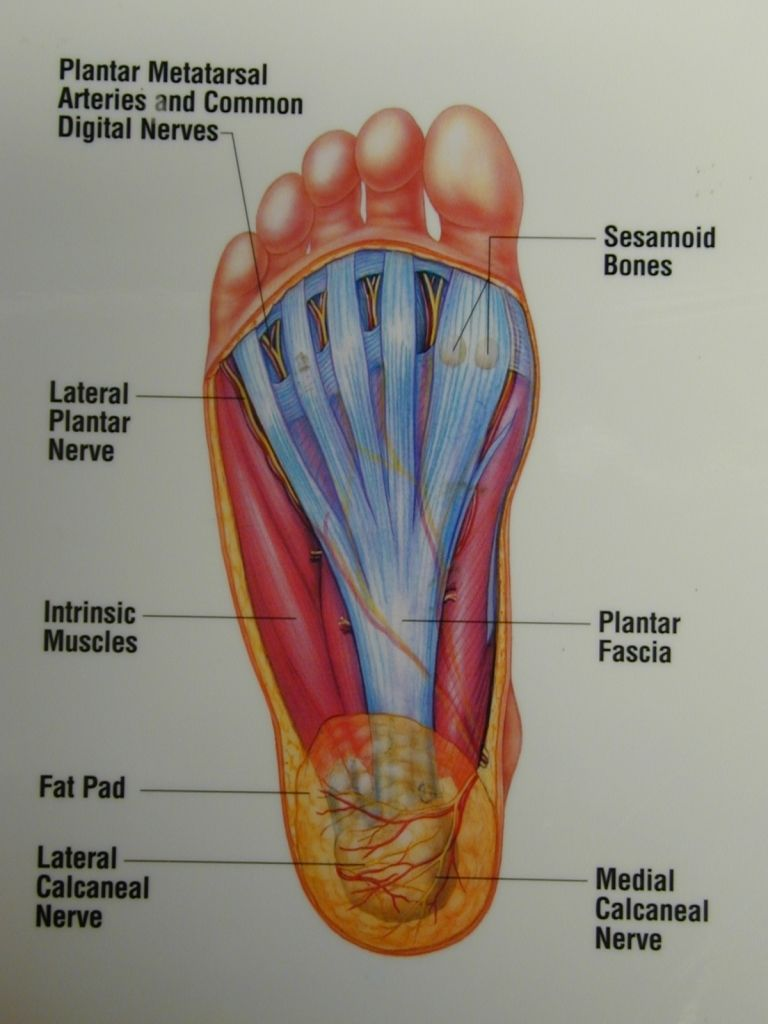 Recommend bottom of the foot anatomy like