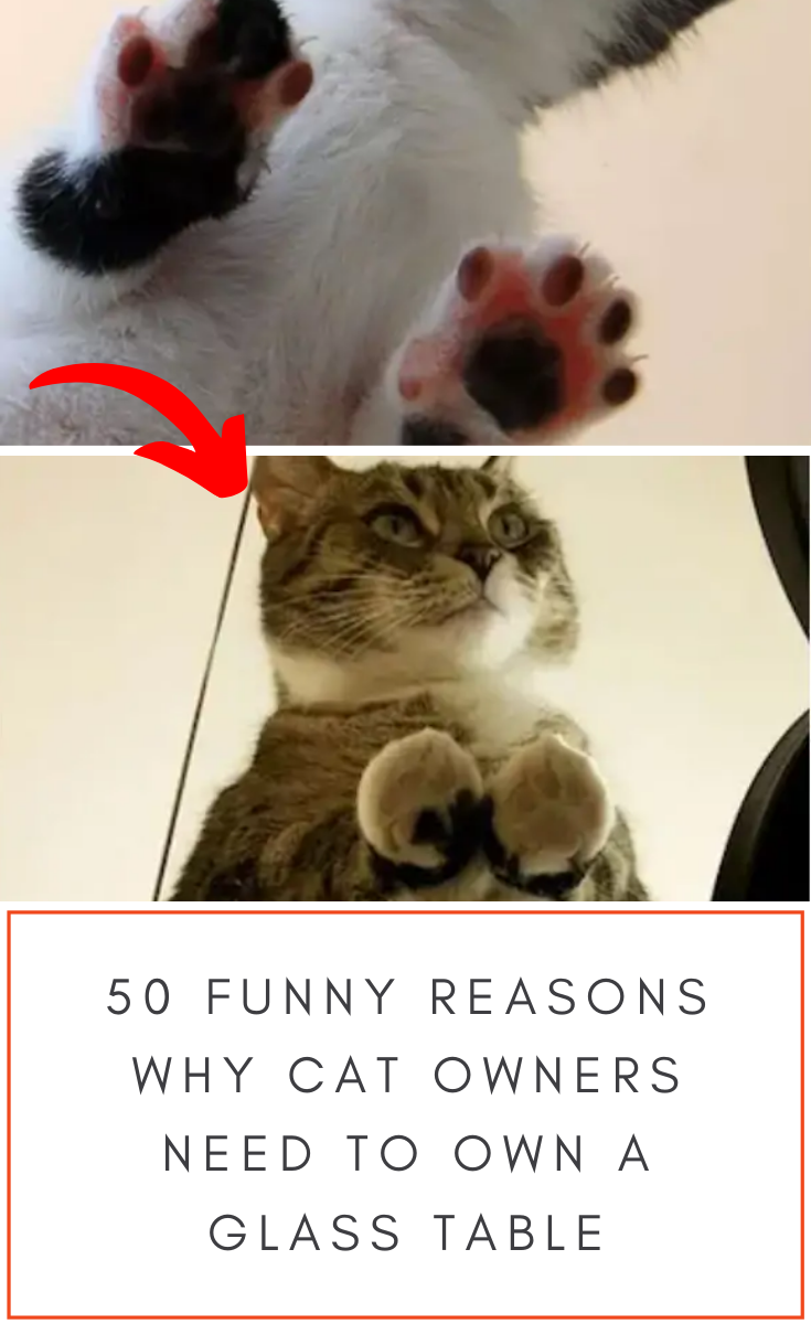 50 absurdly funny reasons why every cat owner needs to