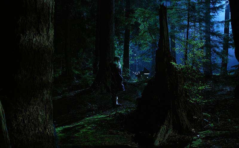 Lighting Forest At Night Color Contrast Lighting Night Forest Neon Nights Landscape Lighting