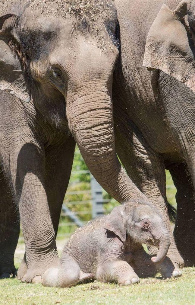 Pin by Andrea Clark on Baby Animals Asian elephant