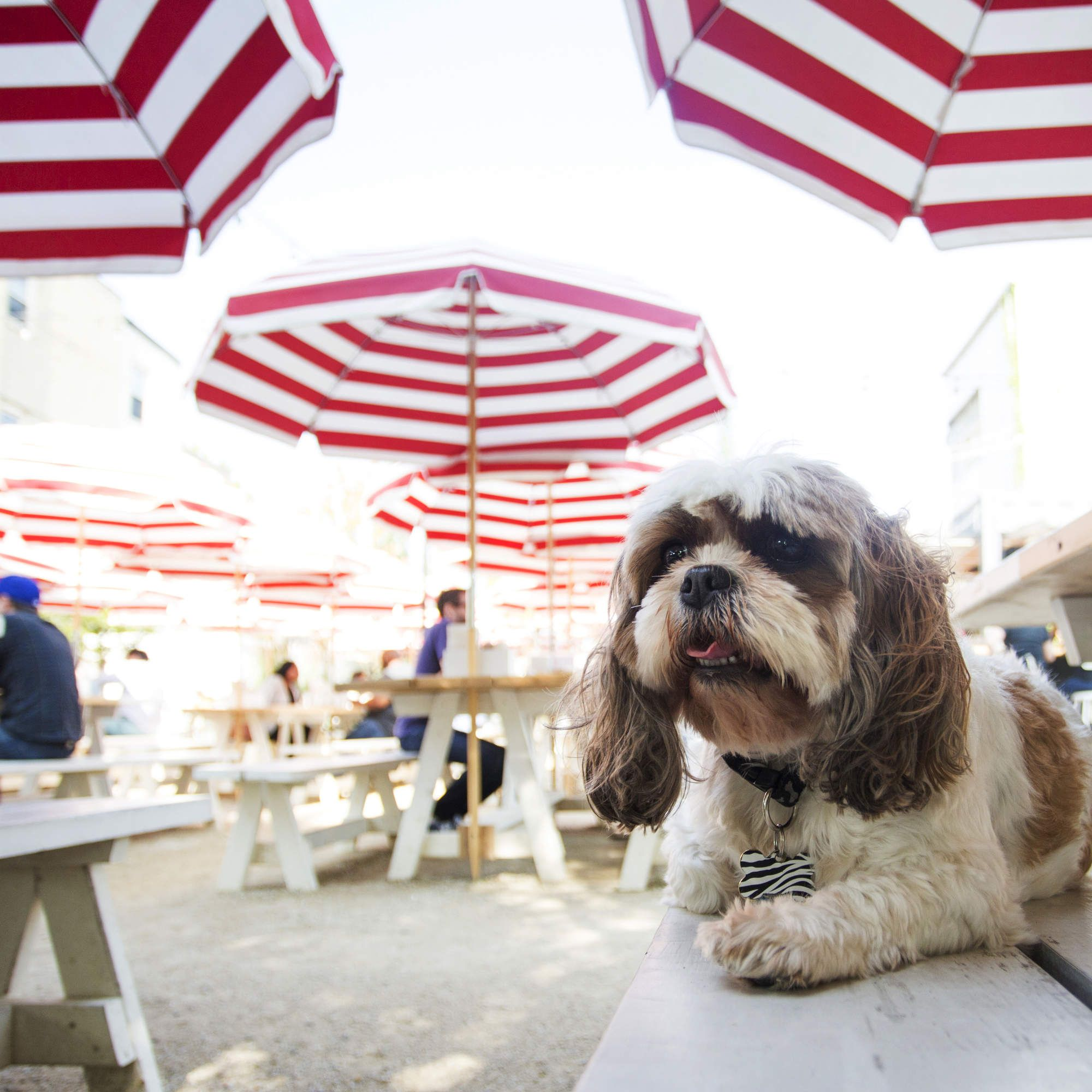 40 Dog Friendly Bars and Restaurants in Chicago