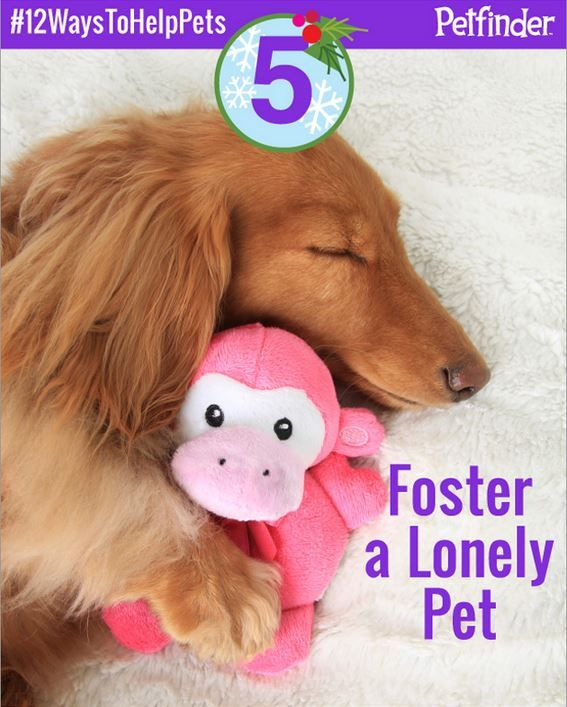 Foster A Homeless Pet It Is One Of The Most Rewarding Experiences You Can Have Check Out Other Ways To Help On The Twelve Pet Spray Pet Odor Eliminator Pets