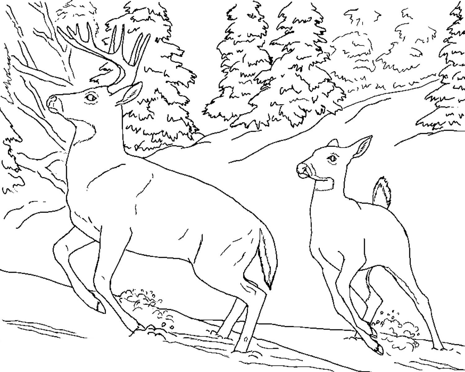 Coloring Printables Free Placemats Printable Deer Pages For Kids