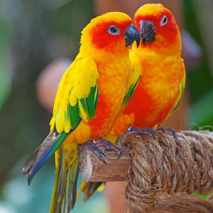 Look at those colors they almost look like lovebirds I don't know what exactly they are. They look like some type of.