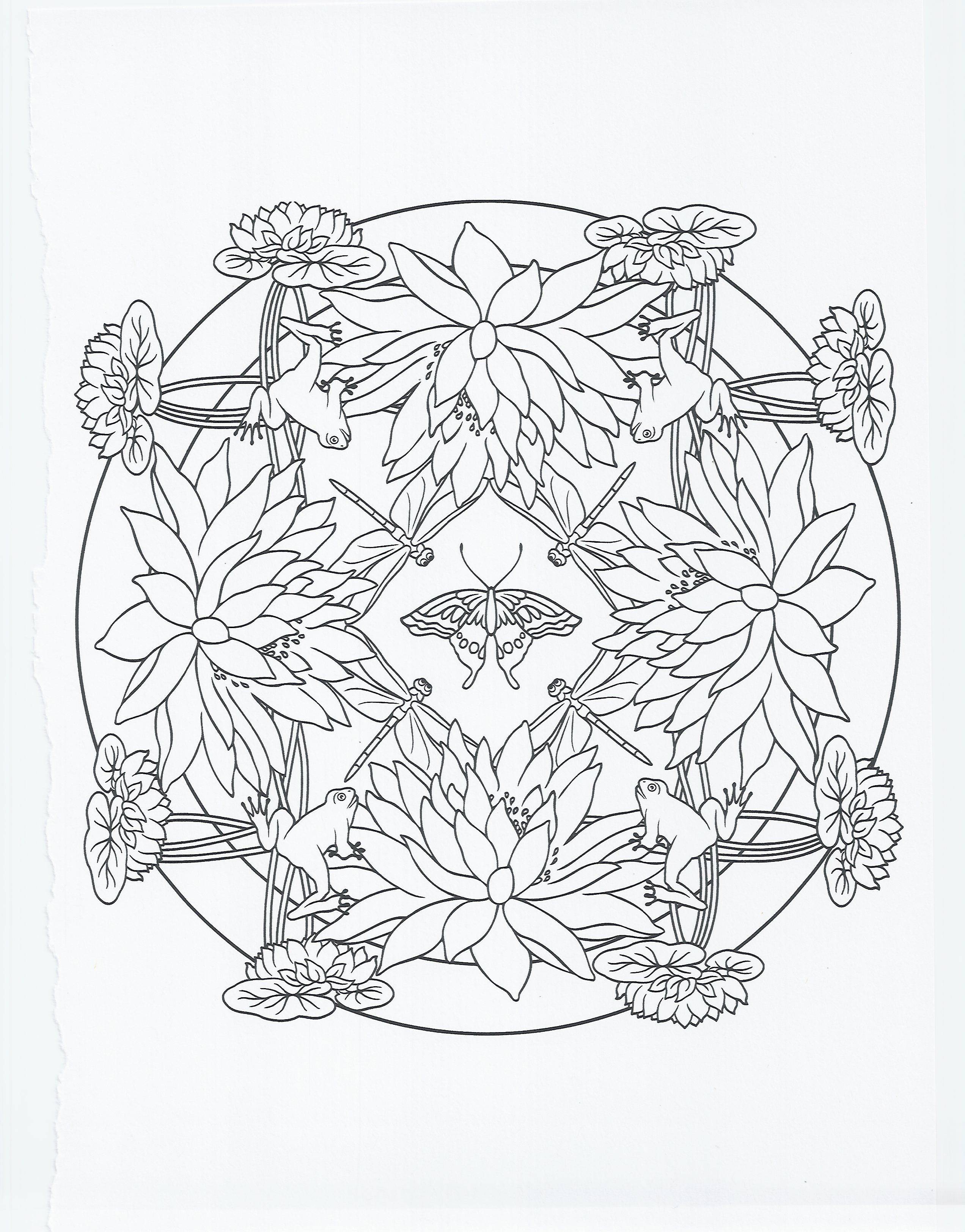 Image result for frog coloring pages for adults Frog