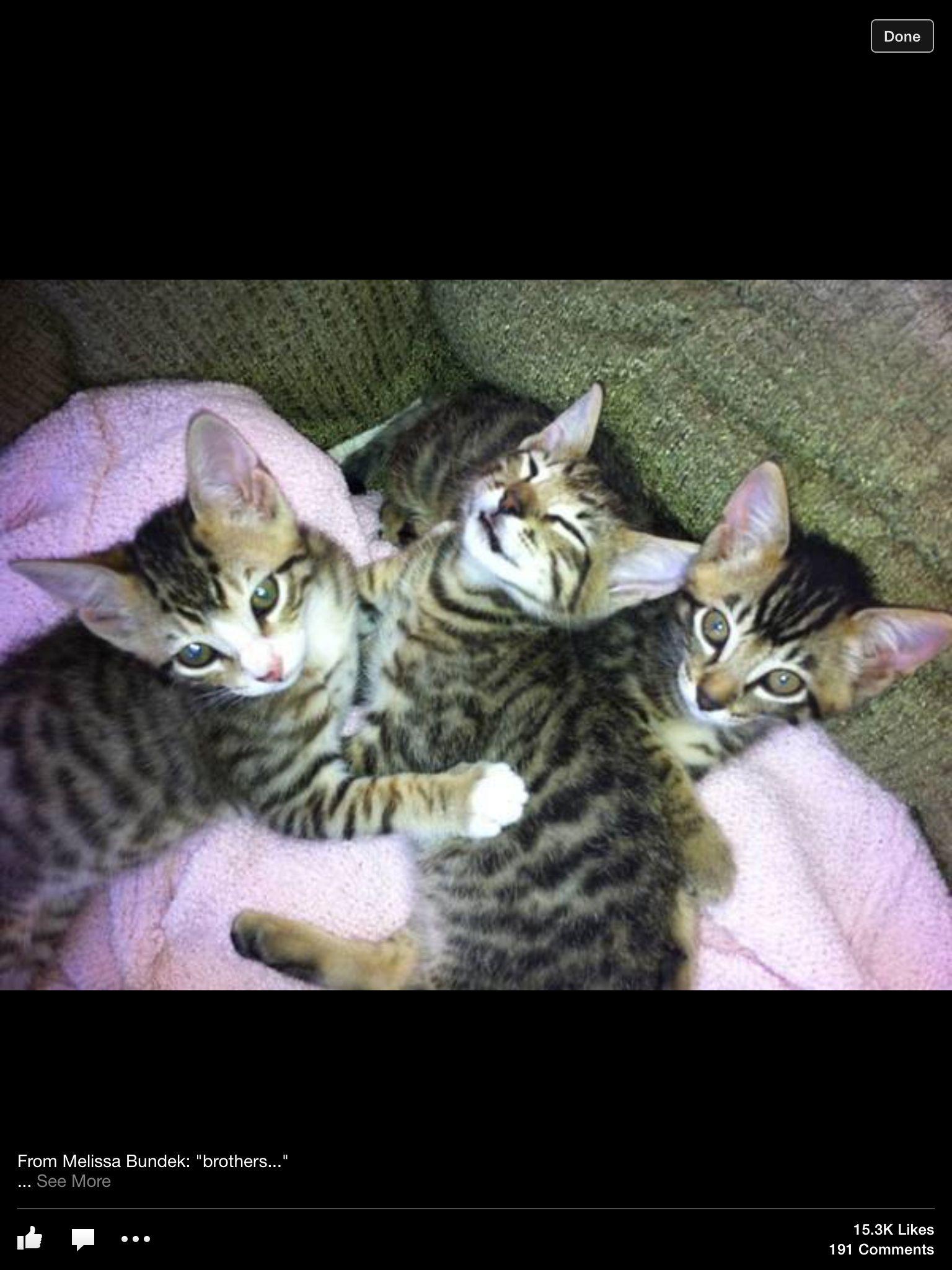 Too Cute! Love Kitties!