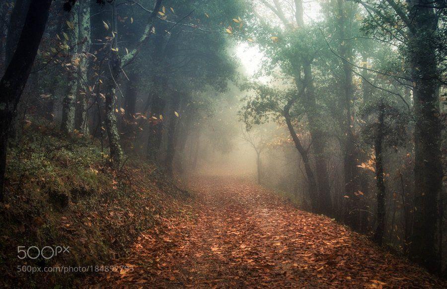 #photography Foggy Path by dariobarbani https://t.co/qy72tqJAr9 #followme #photography