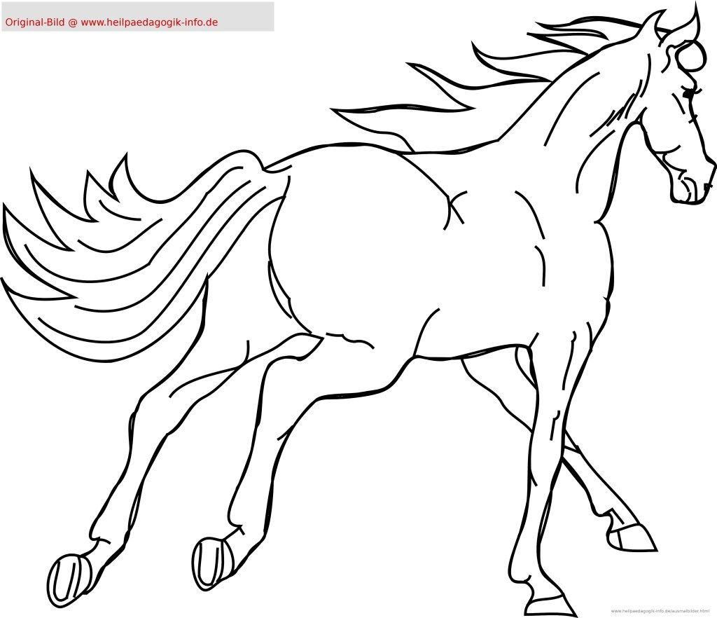 Ostwind Malvorlagen Horse Coloring Pages Horse Coloring Horse Galloping