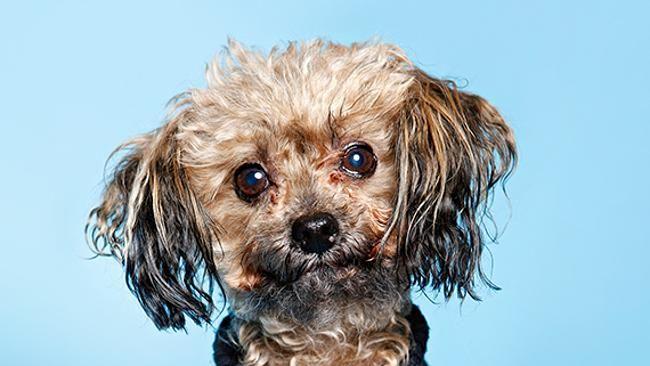 Oscar the rescue dog. Picture: Julian Kingma