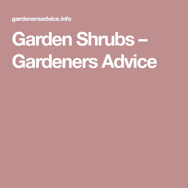 Garden Shrubs – Gardeners Advice