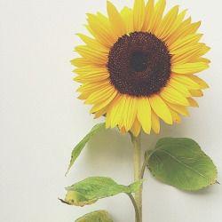 Tumblr Flower Yellow Background Sunflower Mitten O