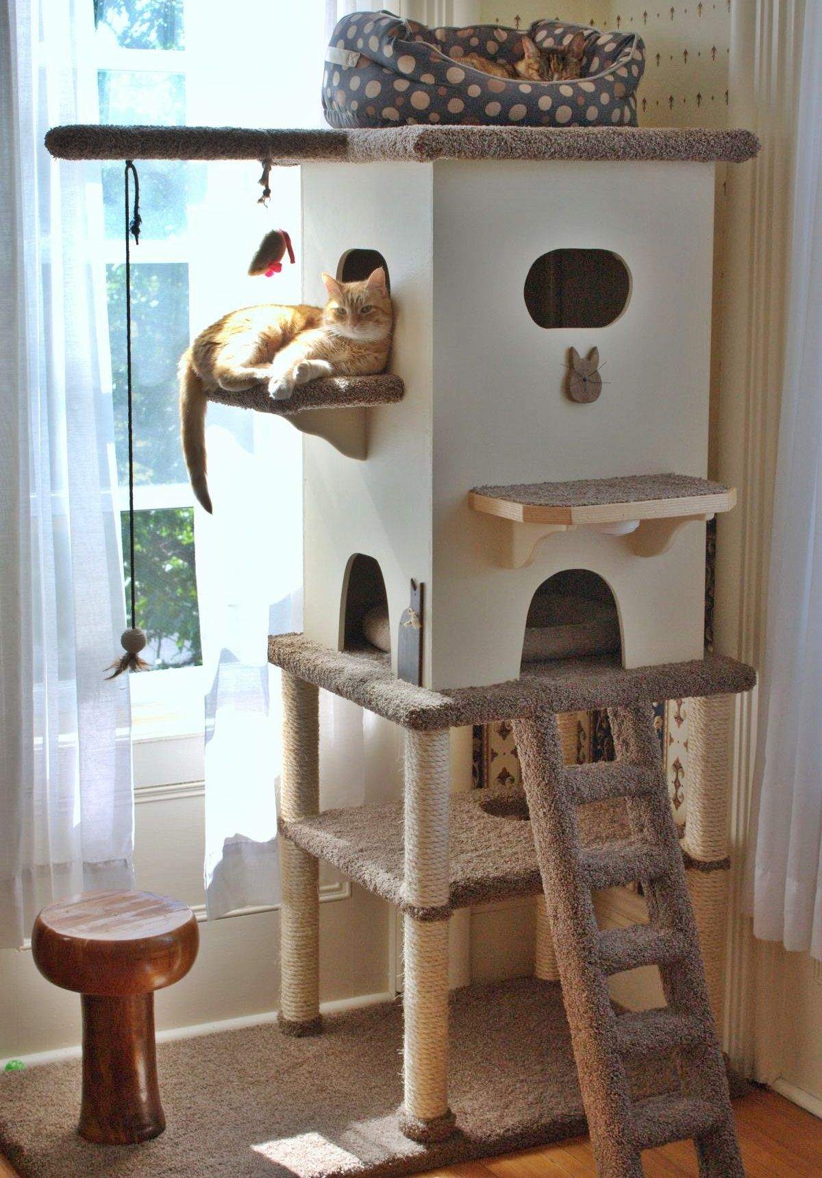 Indoor Trees For Cats