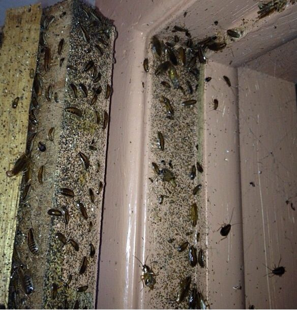 how to get rid of roaches in bedroom