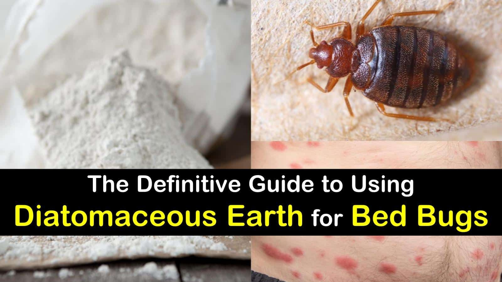 10+ Questions Answered about Using Diatomaceous Earth for